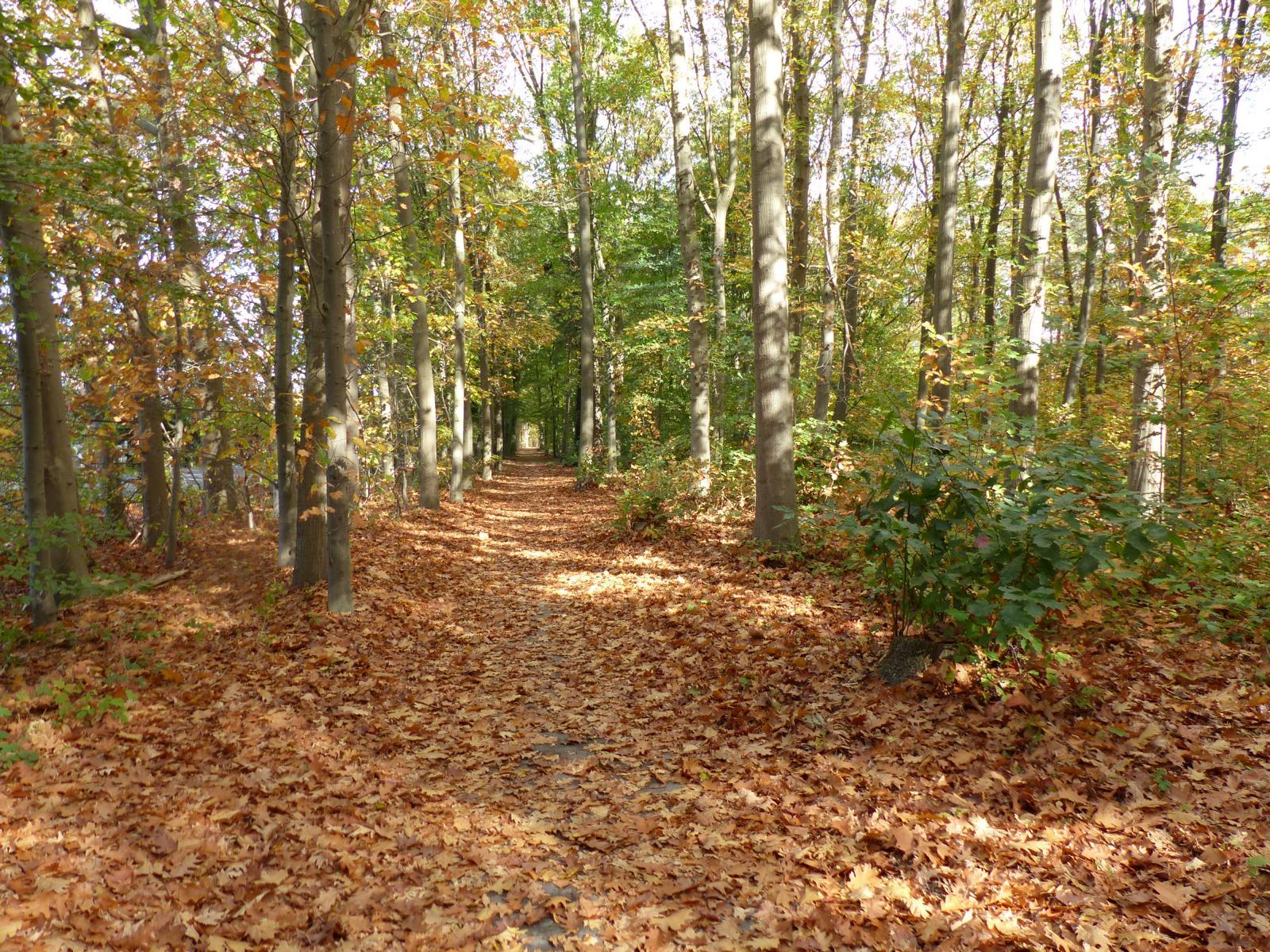 Herbstlandschaft im Münsterland