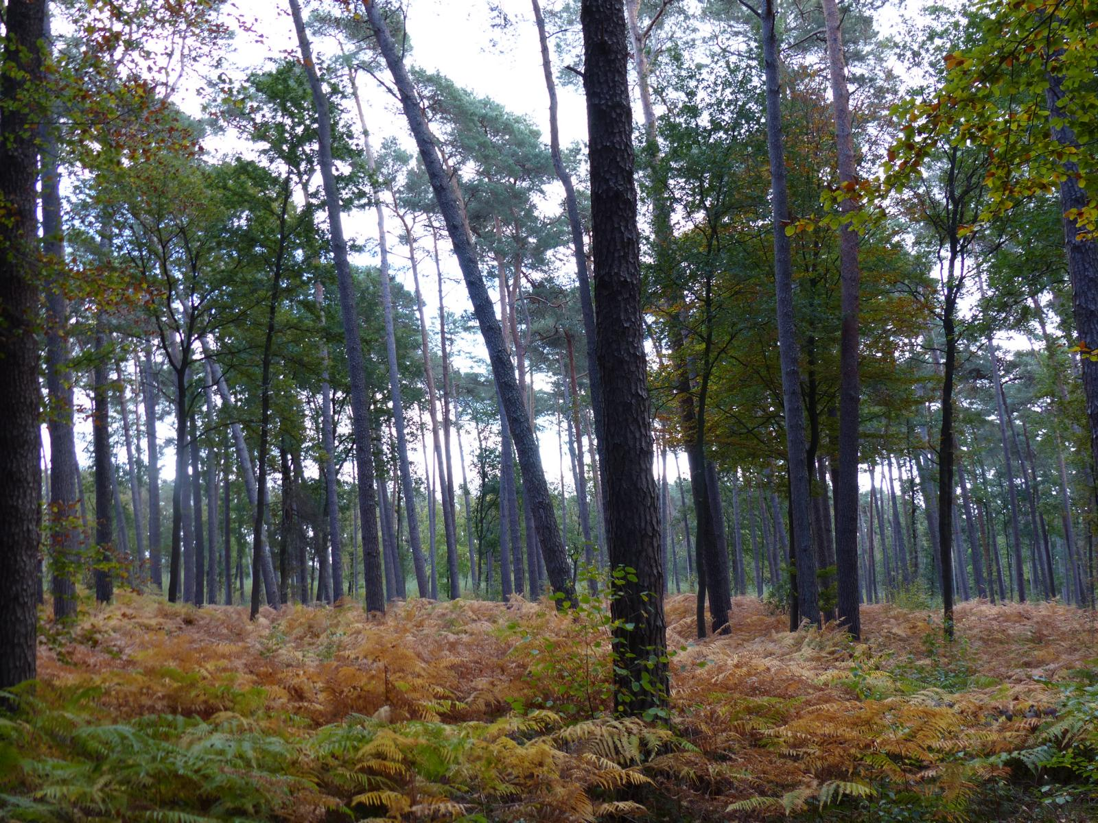 Der Prinzenwald